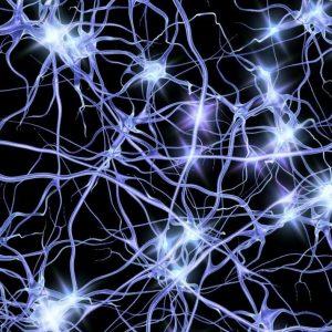 neurons-transmit-electrical-impulses_15e17c39d5f0e17b